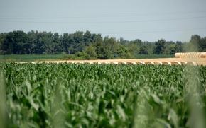 Картинка sky, field, Rural Racine, Nick Scheweitzer