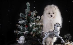 Картинка белый, конь, праздник, новый год, ель, ангел, щенок, шпиц