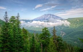 Обои usa, washington, mountains, forests, nature.
