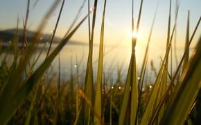 Картинка лучи, счастье, рассвет, тепло, свежесть, Байкал, зелень, озеро, роса, солнце, трава