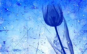 Картинка цветок, тюльпан, стебель, штрих