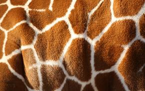 Картинка white, pattern, color, giraffe, Brown, skin