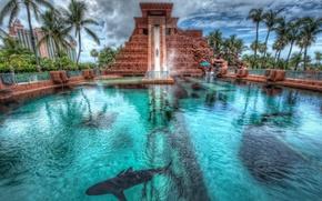 Картинка пальмы, акула, бассейн, Багамские Острова, Bahamas, Nassau, Нассау, Atlantis hotel