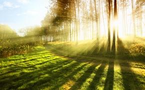 Картинка лес, лето, трава, солнце, лучи, свет, деревья, природа, тепло, дерево, настроение, весна, grass, forest, широкоформатные …