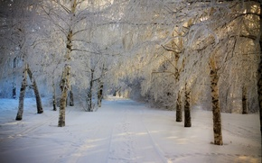 Картинка зима, дорога, лес, небо, снег, деревья, пейзаж, природа, white, forest, road, sky, trees, nature, beautiful, ...