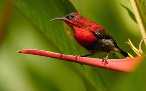 Картинка птица, цвет, перья, клюв, колибри, экзотика