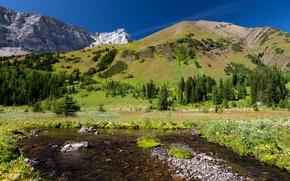 Картинка лес, горы, природа, камни, луг, Лесной ключ