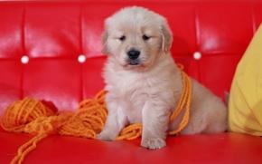 Картинка красный, диван, собака, щенок, нитки, пряжа, обои от lolita777