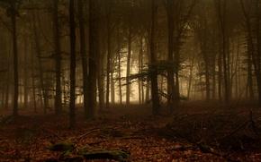 Обои Деревья, Лес, Туман, Мох, Ветки, Листья
