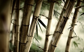 Обои трава, листья, Бамбук