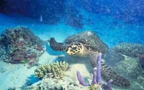 Картинка море, океан, кораллы, подводный мир