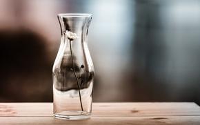 Картинка ваза, цветок, фон