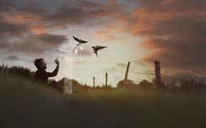 Картинка птицы, рисунок, арт, скворечник, мужчина