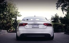 Картинка Audi, ауди, сзади, белая, white