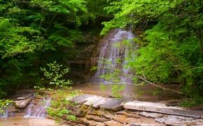 Картинка зелень, лес, вода, свежесть, природа, green, водопад, весна, forest, water, leaves, waterfall