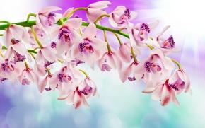 Обои цветы, flowers, ветка