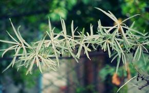 Картинка макро, дерево, Природа, боке, липа
