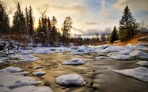 Обои вода, снег, лед, зима, деревья, лес