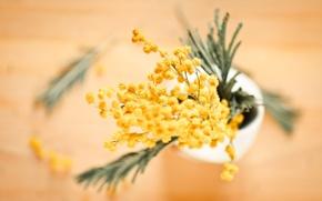 Обои ваза, цветы, размытость, желтые, мимоза, бутоны