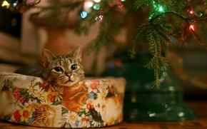 Обои гирлянда, подарок, елка