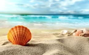 Картинка песок, море, пляж, ракушка, summer, beach, sea, sand, shell