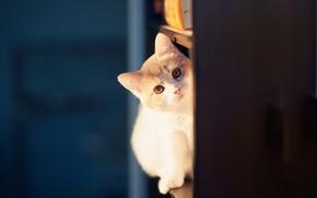 Картинка котенок, © Ben Torode, Hannah