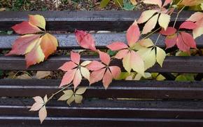 Картинка осень, листья, скамейка, лист, парк, дождь, widescreen, обои, wallpaper, скамья, широкоформатные, background, обои на рабочий …