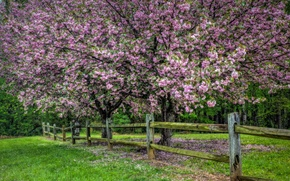 Картинка природа, дерево, забор, весна