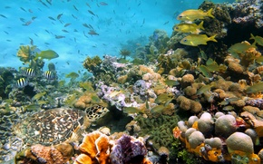 Картинка фото, Природа, Рыбы, Море, Камни, Кораллы, Ракушки, Подводный мир