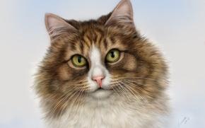 Картинка глаза, кот, усы, взгляд, морда, портрет, красавец