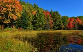Картинка осень, лес, небо, трава, деревья, пруд