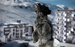 Картинка снег, город, собака