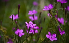Картинка поле, трава, цветы, лепестки, луг