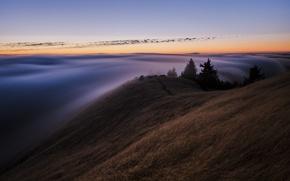 Картинка лес, небо, туман, вечер, утро, Калифорния, США