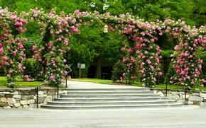 Картинка деревья, цветы, парк, газон, розы, лестница, дорожка, ступеньки, навес, США, кусты, Longwood Gardens