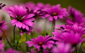 Картинка цветы, красота, макро хорошее качество
