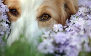 Картинка собака, цветы, друг