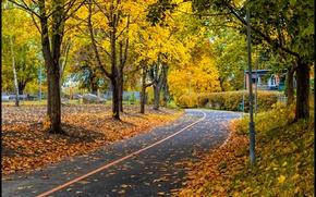 Картинка осень, парк, листва, дорожка, листопад, park, Autumn, leaves, path, fall