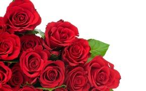 Обои цветы, красные розы, бутоны, листья