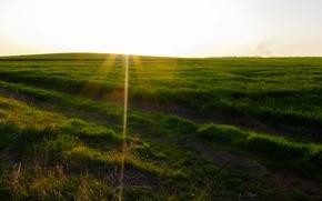 Картинка дорога, солнце, деревья, закат, Поле, посадка, синее небо