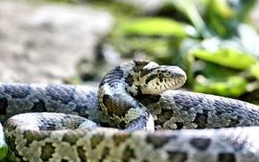 Картинка snake, animal, animaleins
