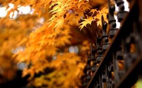 Картинка осень, листья, природа, ограда, решетка, nature, autumn, leaves, fence, lattice