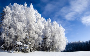 Картинка зима, лес, небо, иний, холодно, Winter is beautiful but cold