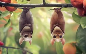 Обои дерево, две, фрукты, летучие мыши, арт, мандарины