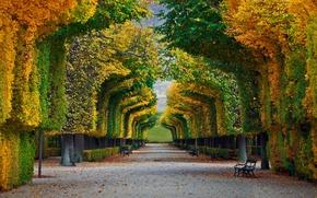 Обои осень, Вена, скамья, деревья, сад, Австрия, Шёнбрунн, парк