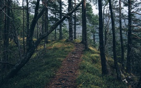 Картинка forest, trees, nature, path