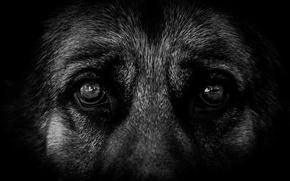 Картинка глаза, взгляд, друг, пёс