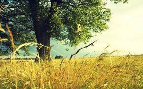 Обои дерево, Лето, поле, травы