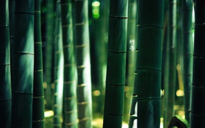 Картинка лес, бамбук, иероглифы, 1920x1200, by burningmonk, green colour