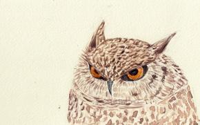 Картинка сова, птица, рисунок